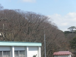 4月1日 千秋公園